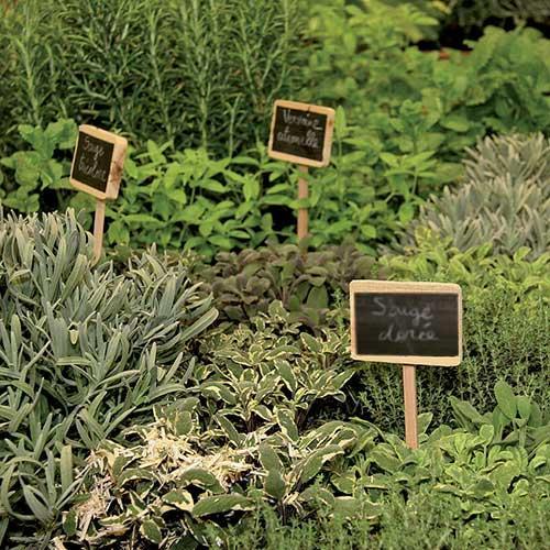 les herbes aromatiques bio en cuisine dury. Black Bedroom Furniture Sets. Home Design Ideas
